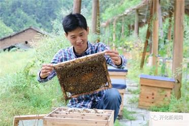 Không tìm được việc, chàng trai về quê nuôi ong kiếm vài trăm triệu ngon ơ